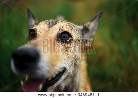 Funny Happy Mongrel Dog With Natural Background