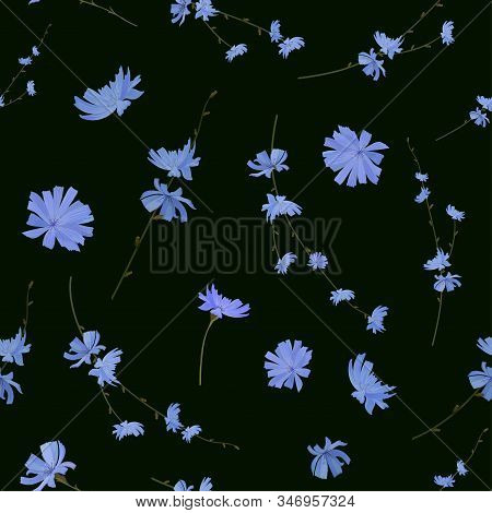 Flowers And Branches With Chicory Flowers On A Dark Background. Seamless Pattern. Vector