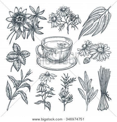 Medical Tea Herbs Set, Isolated On White Background. Vector Hand Drawn Sketch Illustration. Cup With