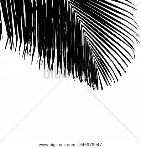 Black Vector Illustration Of A Big Cocos Nucifera Palm Leaf On The White Background