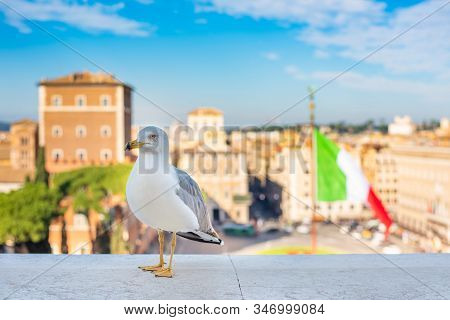 Seagull Is Looking Into The Camera On Piazza Venezia In Rome Against The Background Of The Italian F