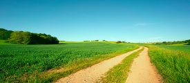 Country Road in Grain Field,  a Kansas  USA