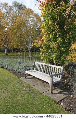 Garden Bench In Cambridge Botanic Garden