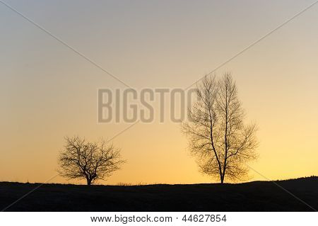 Silhouette Of Two Trees.