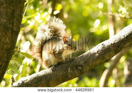 Little Squirrel On A Tree