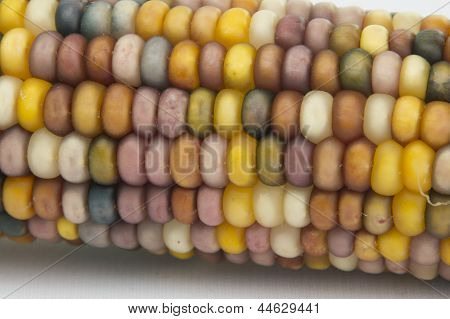 Ears Of Indian Corn Isolated On White Background