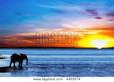 Drinking Elephant Silhouette