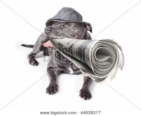 Isolated Newspaper Dog Carrying Latest News