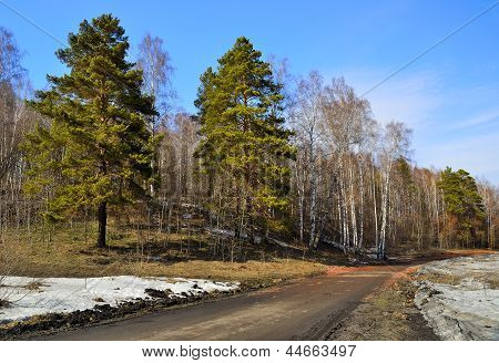 A road in the spring forest.