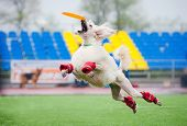 poodle dog catching disc in jump in competitions poster