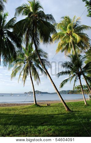 Coconut palms on a beach