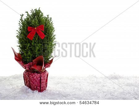 Little Christmas Tree On Snow With White Background
