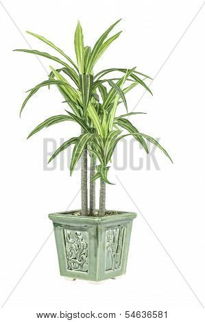 Green Plant And Flower Pot