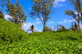 Jungle forest scenic background and beach. Big trees and green plants landscape in Seychelles. poster