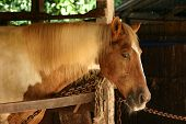 horse in a stable poster