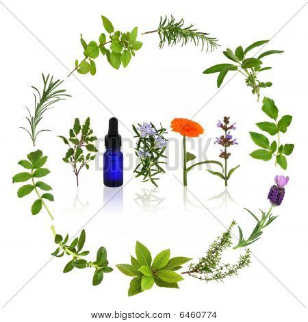 Medicinal and culinary herb leaves and flowers  in a circular design with an aromatherapy essential oil glass bottle, over white background. poster
