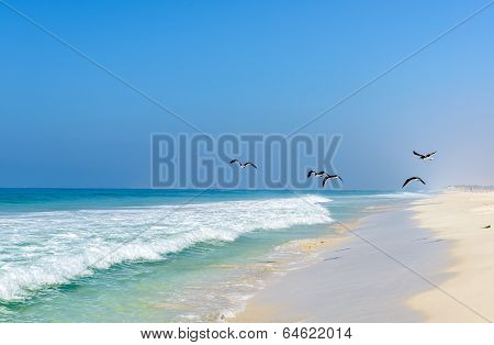 Beach Of Salalah, Dhofar (oman)