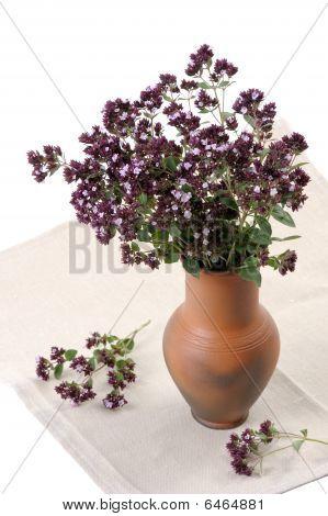 Origan (origanum Vulgare)