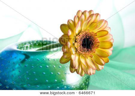 Yelow Margarita Flower