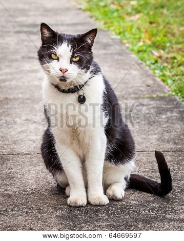 Black And White Cat Sitting And Leaning Sideways On The Sidewalk