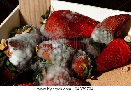 Lot of old mold strawberries nice texture of mold. poster