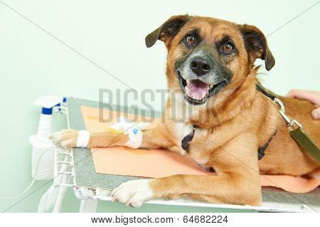 veterinary giving the vaccine to the dog in clinic