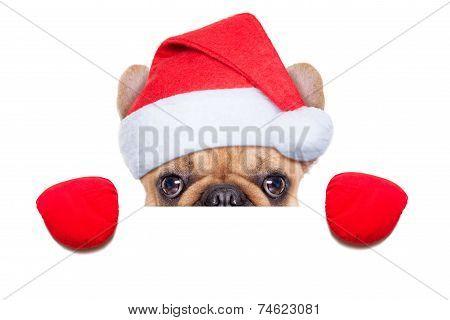 Santa Calus Dog