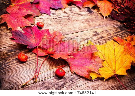 Colored autumn leaves in the paper bag.