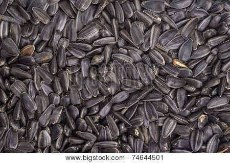 food background from black seeds of sunflower closeup poster