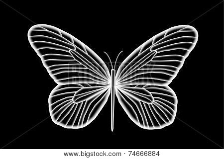 Florescent White Butterfly