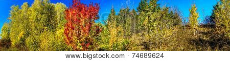 Vivid Autumn Panoramic Landscape.