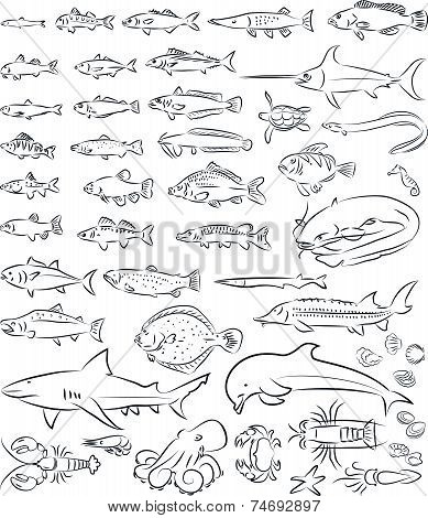 Sea Fishes And Creatures
