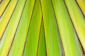 Close-up of interwoven leaves of a palm poster