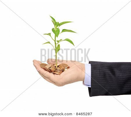Hand holding a plant growing from pile of coins
