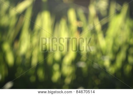 Abstract Nature Green Blur Background