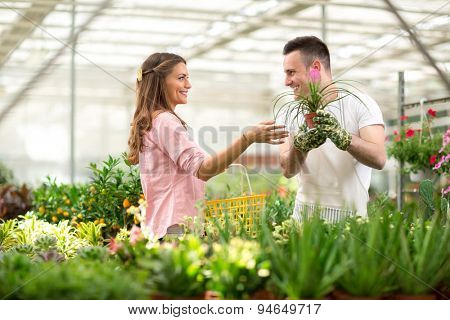 Customer seek advice of the seller for the purchase of flowers in glasshouse store