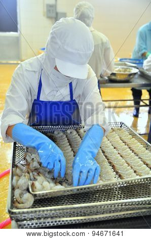 Tra Vinh, Vietnam - November 19, 2012: Workers Are Rearranging Peeled Shrimp Onto A Tray To Put Into