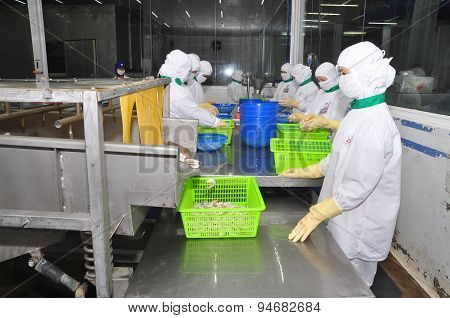 Hau Giang, Vietnam - June 23, 2013: Workers Are Working With A Shrimp Sizing Machine In A Processing