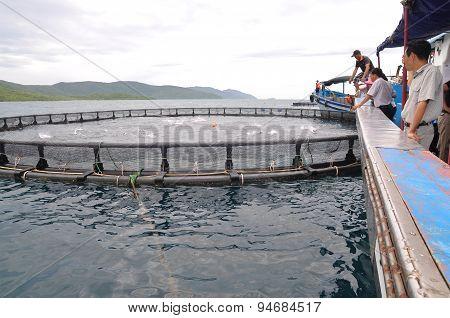 Nha Trang, Vietnam - June 23, 2013: Feeding Barramundi Fish By Machine In Cage Culture In The Van Ph
