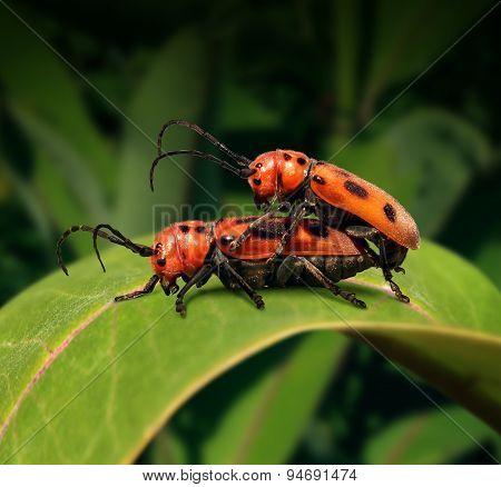 Sex In Nature