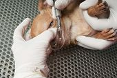 Veterinary performing an operation on a puppy's head poster