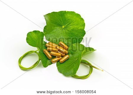 Green Asiatic Pennywort (Centella asiatica ) and yellow pill capsules on white background