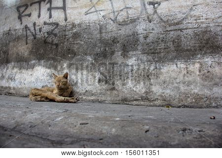 sick cat sleeping on the dirty road