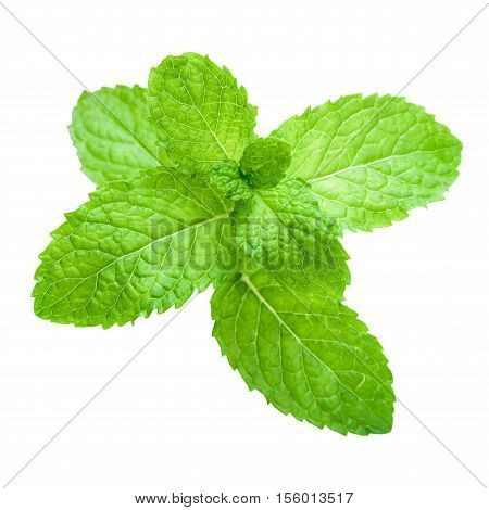 Fresh Raw Mint Leaves Isolated.