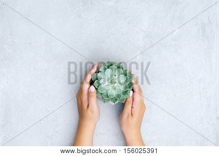 decorative or a houseplant in hands of the person
