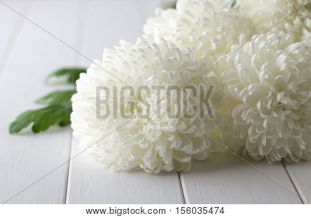 Bouquet of fresh white chrysanthemums on a white wooden background. Fragrant seasonal flowers on white table. Selective focus.