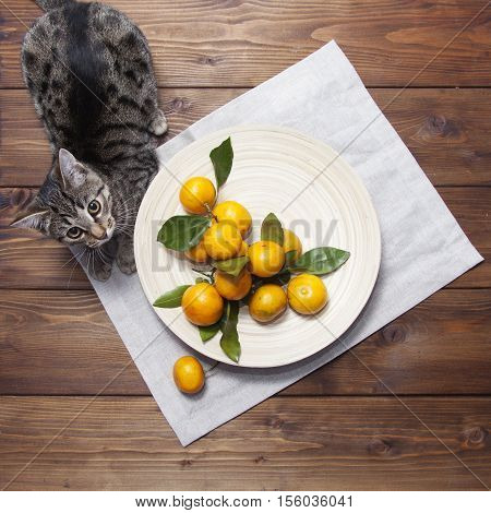 Still life with tangerines (mandarins) on a plate and cat