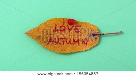 picture of a autumn walnut leaves with handwritten text love autumn