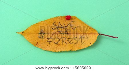 picture of a autumn walnut leaves with handwritten text save the forest