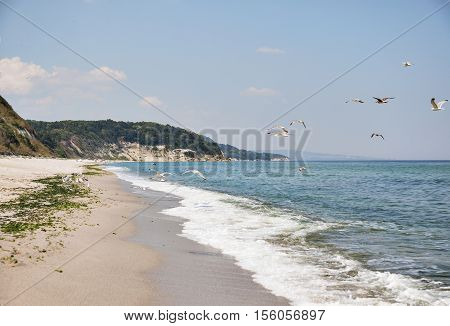 A horizontal view of a remote beach with a few people somewhere far away and flying herring-gulls.